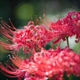 Fleur d'automne img