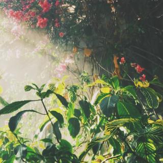 Magic garden img